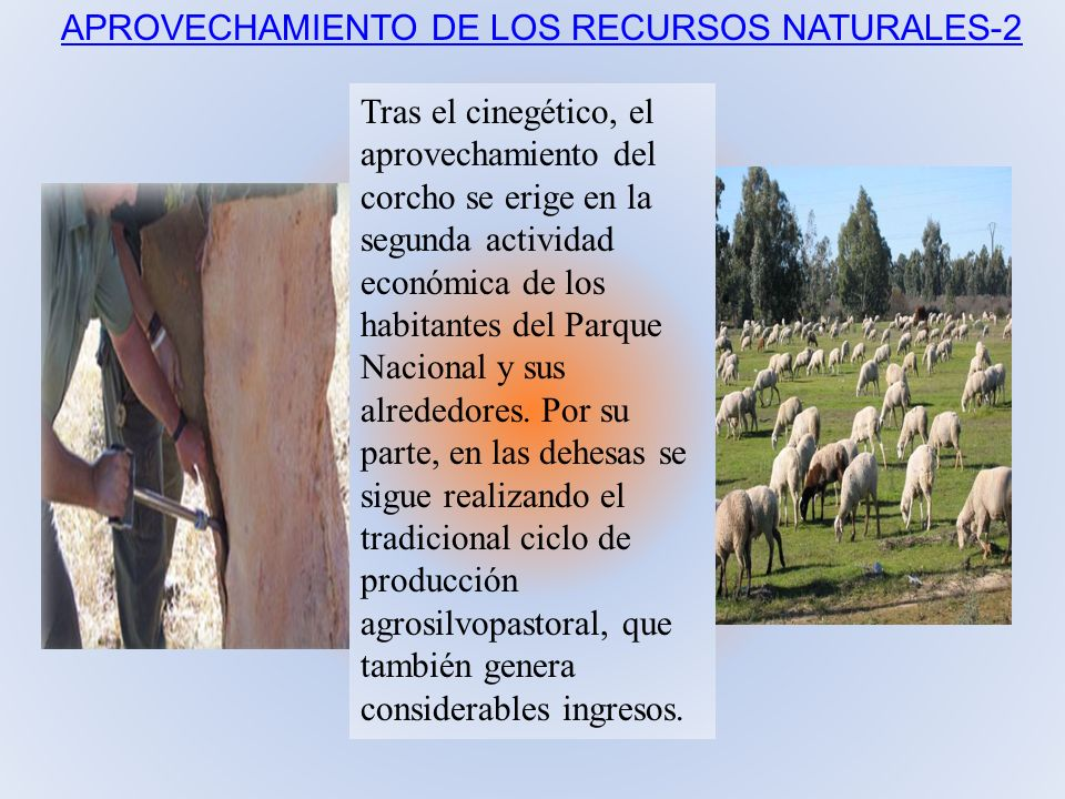 Tras el cinegético, el aprovechamiento del corcho se erige en la segunda actividad económica de los habitantes del Parque Nacional y sus alrededores.