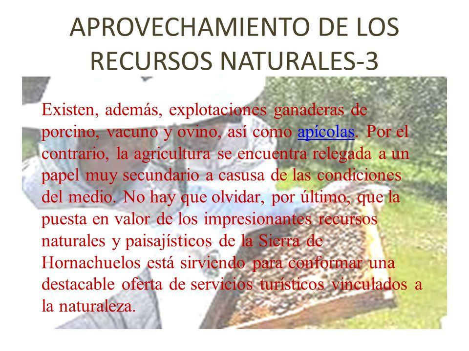 APROVECHAMIENTO DE LOS RECURSOS NATURALES-3 Existen, además, explotaciones ganaderas de porcino, vacuno y ovino, así como apícolas. Por el contrario,