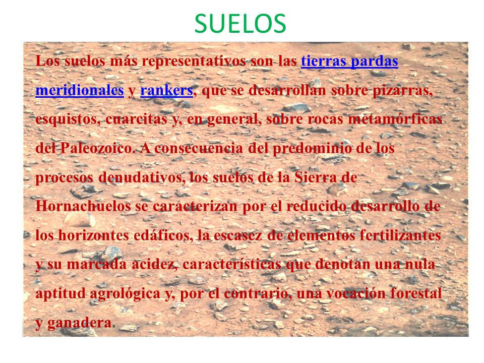 SUELOS Los suelos más representativos son las tierras pardas meridionales y rankers, que se desarrollan sobre pizarras, esquistos, cuarcitas y, en gen
