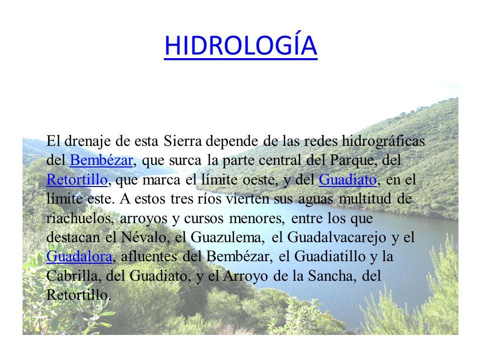 HIDROLOGÍA El drenaje de esta Sierra depende de las redes hidrográficas del Bembézar, que surca la parte central del Parque, del Retortillo, que marca