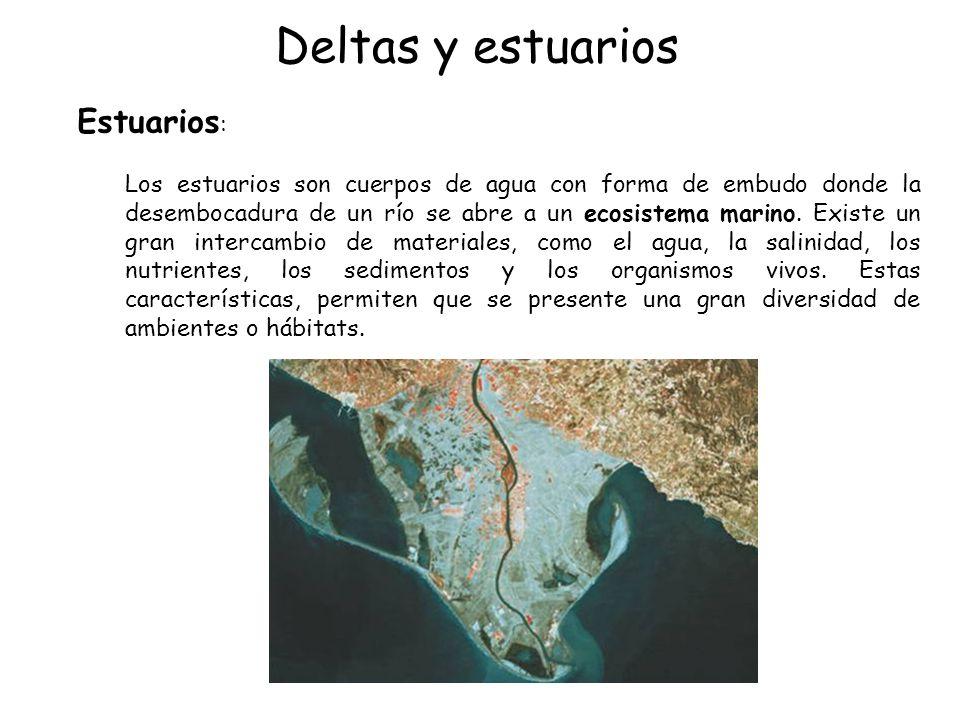 Deltas y estuarios Estuarios : Los estuarios son cuerpos de agua con forma de embudo donde la desembocadura de un río se abre a un ecosistema marino.