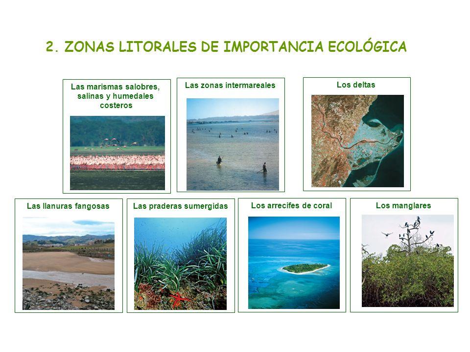 2. ZONAS LITORALES DE IMPORTANCIA ECOLÓGICA Los arrecifes de coralLos manglares Las zonas intermareales Las llanuras fangosasLas praderas sumergidas L