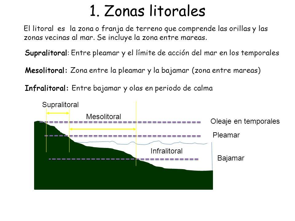 1. Zonas litorales El litoral es la zona o franja de terreno que comprende las orillas y las zonas vecinas al mar. Se incluye la zona entre mareas. Su