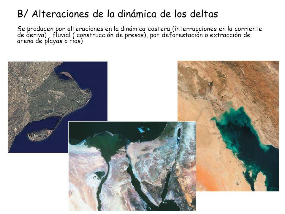 B/ Alteraciones de la dinámica de los deltas Se producen por alteraciones en la dinámica costera (interrupciones en la corriente de deriva), fluvial (