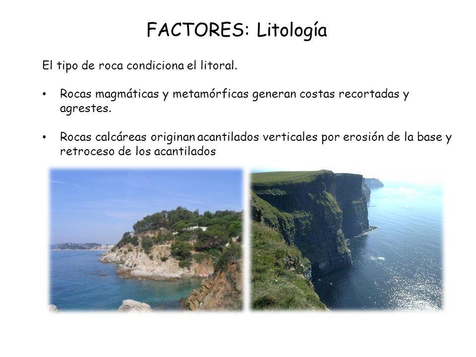 FACTORES: Litología El tipo de roca condiciona el litoral. Rocas magmáticas y metamórficas generan costas recortadas y agrestes. Rocas calcáreas origi