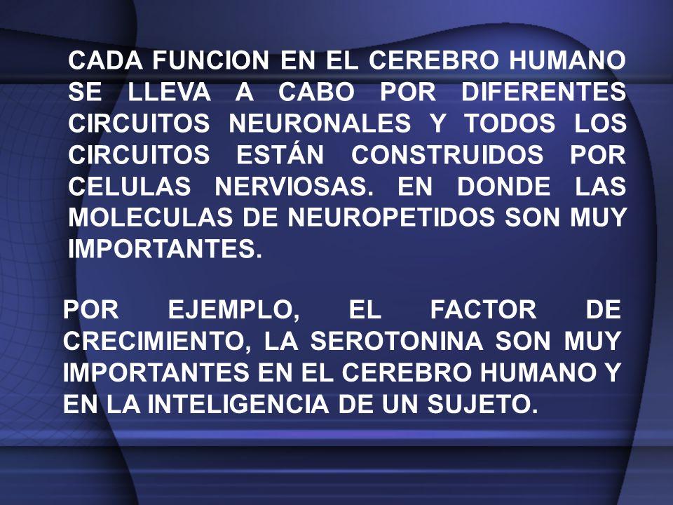 CADA FUNCION EN EL CEREBRO HUMANO SE LLEVA A CABO POR DIFERENTES CIRCUITOS NEURONALES Y TODOS LOS CIRCUITOS ESTÁN CONSTRUIDOS POR CELULAS NERVIOSAS.