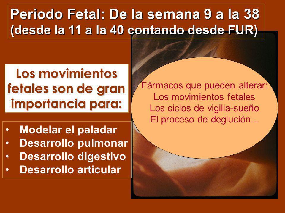 Los movimientos fetales son de gran importancia para: Modelar el paladar Desarrollo pulmonar Desarrollo digestivo Desarrollo articular Periodo Fetal: De la semana 9 a la 38 (desde la 11 a la 40 contando desde FUR) Fármacos que pueden alterar: Los movimientos fetales Los ciclos de vigilia-sueño El proceso de deglución...