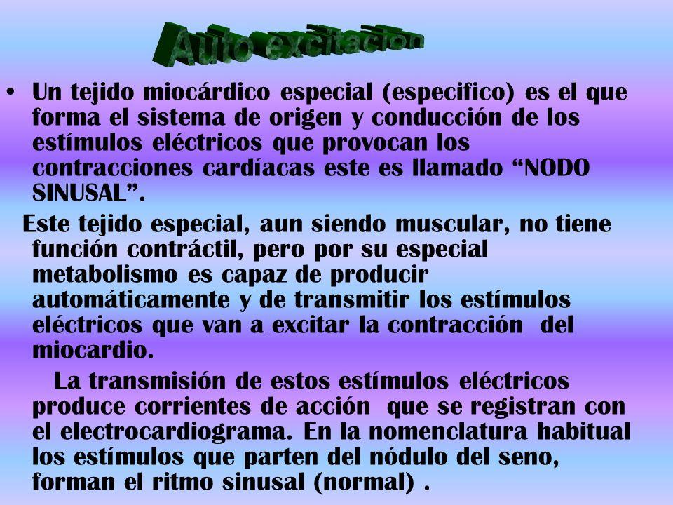 Un tejido miocárdico especial (especifico) es el que forma el sistema de origen y conducción de los estímulos eléctricos que provocan los contraccione