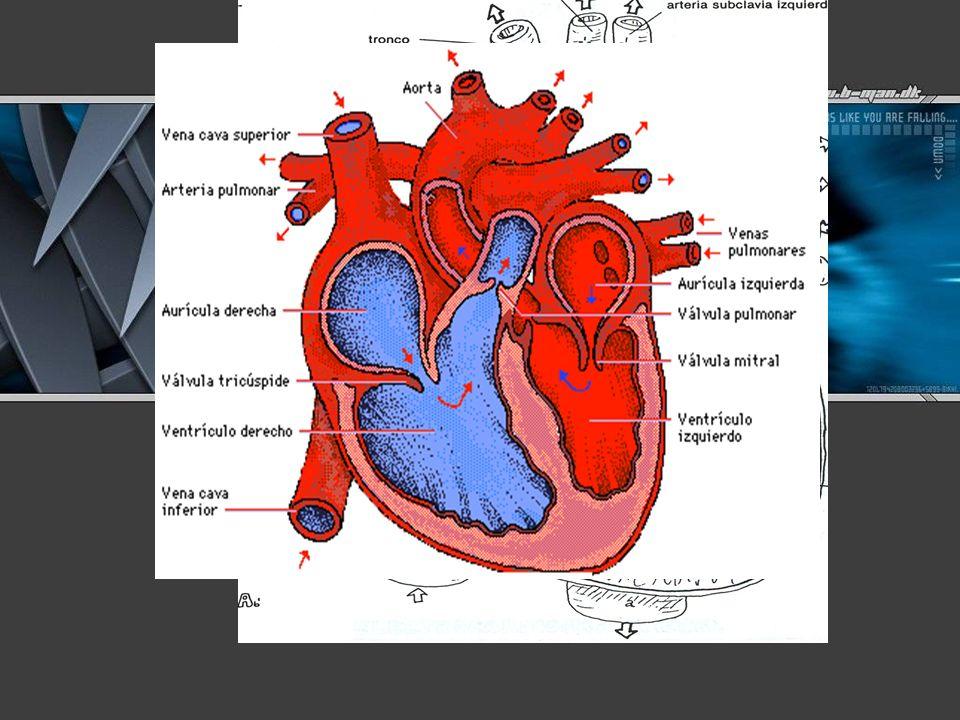 Seguramente te has preguntado ¿Qué es lo que mueve a tu corazón.