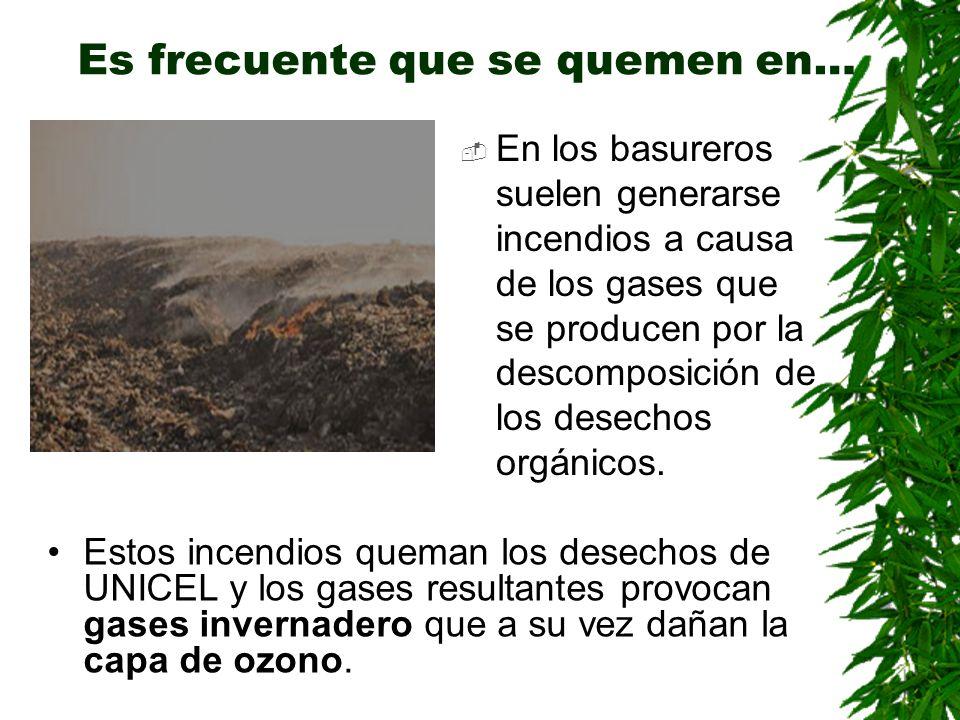 Es frecuente que se quemen en… En los basureros suelen generarse incendios a causa de los gases que se producen por la descomposición de los desechos