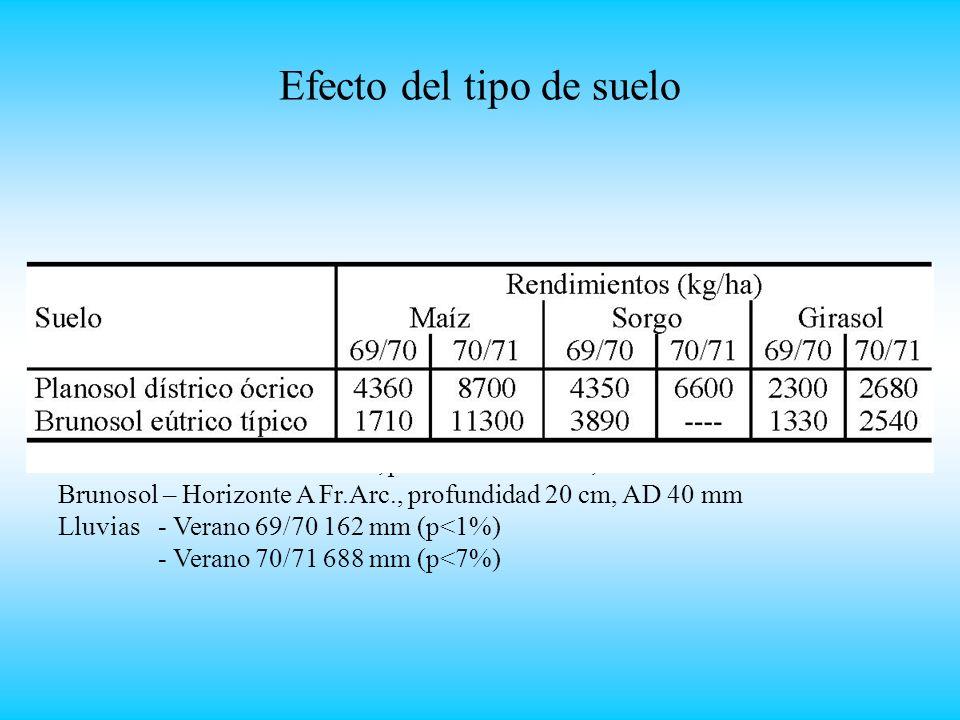 Efecto del tipo de suelo Planosol – Horizonte A Fr.Ar., profundidad 50 cm, AD 62 mm Brunosol – Horizonte A Fr.Arc., profundidad 20 cm, AD 40 mm Lluvias - Verano 69/70 162 mm (p<1%) - Verano 70/71 688 mm (p<7%)