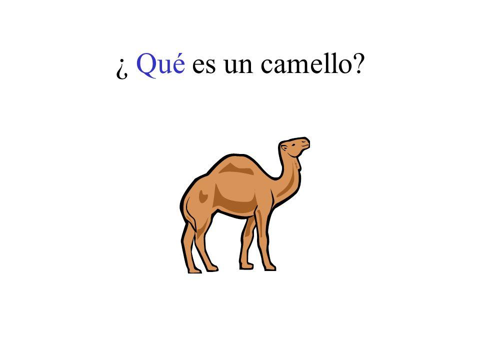 ¿ Qué es un camello