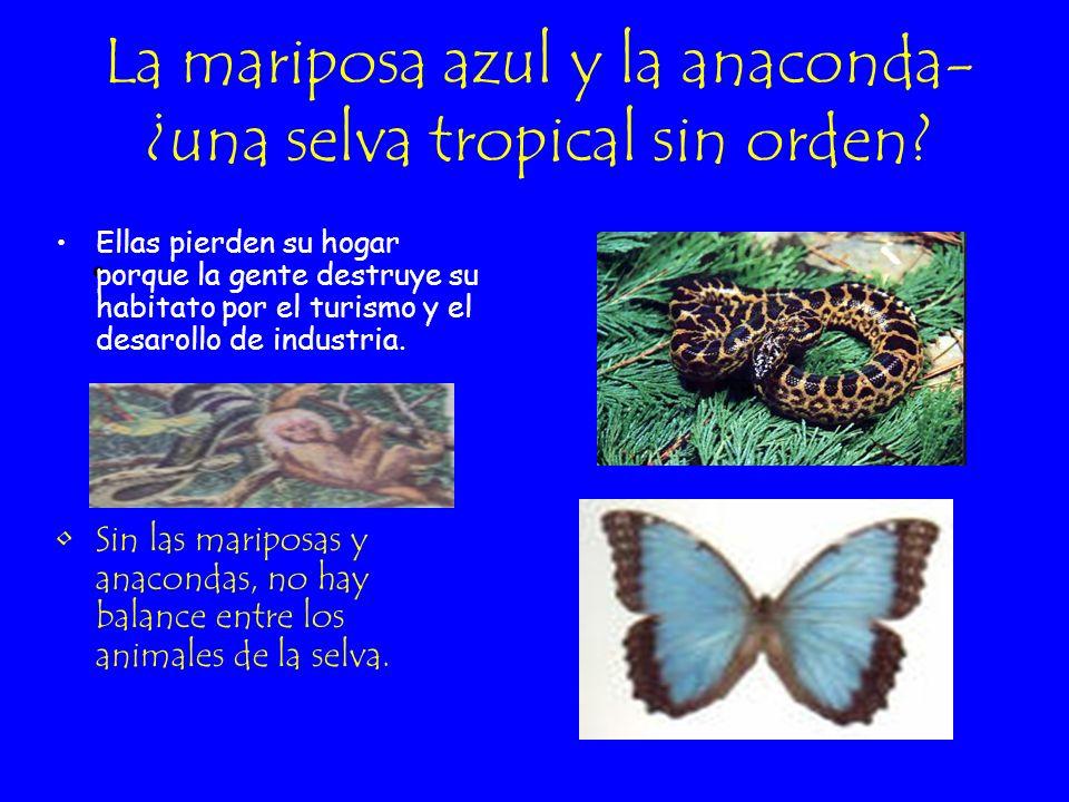 La mariposa azul Sudamérica La mariposa azul is una de las mariposas más bonitas del mundo