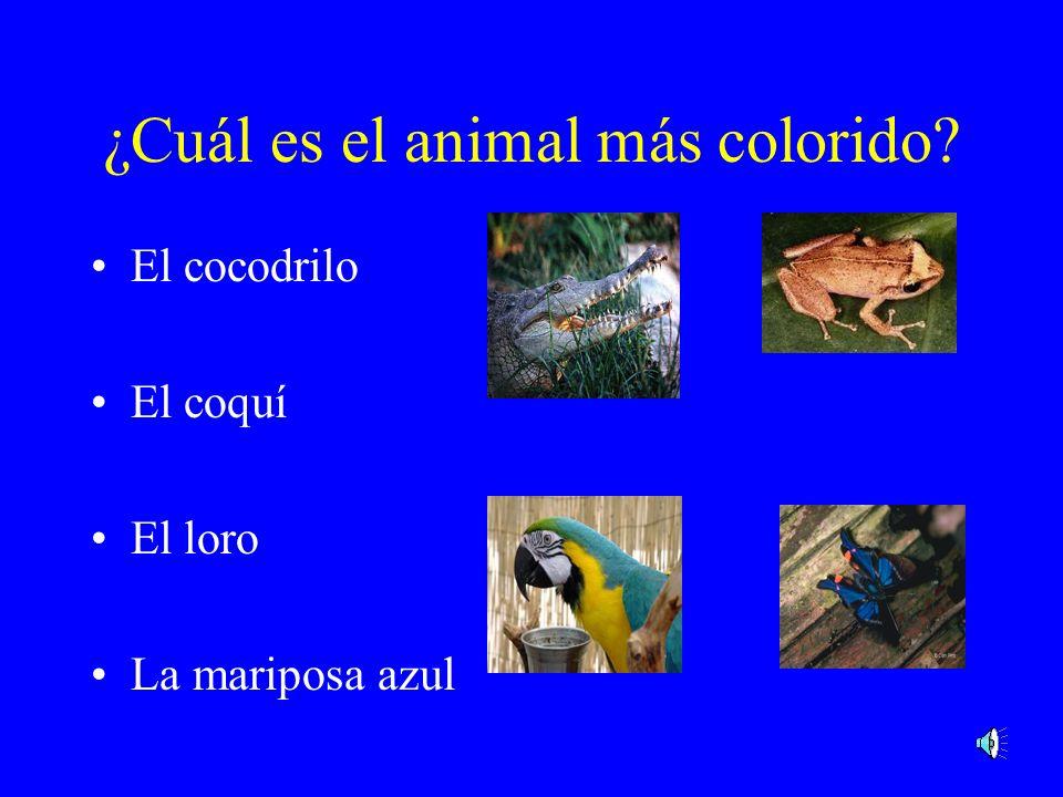 La anaconda Venezuela, Colombia, y Bolivia La anaconda es la serpiente más grande del mundo. El récord es de 11.4 metros de longitud.