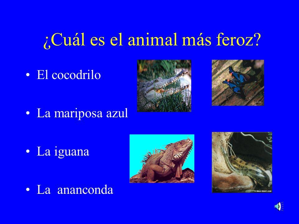 ¿Cuál es el animal más colorido? El cocodrilo El coquí El loro La mariposa azul