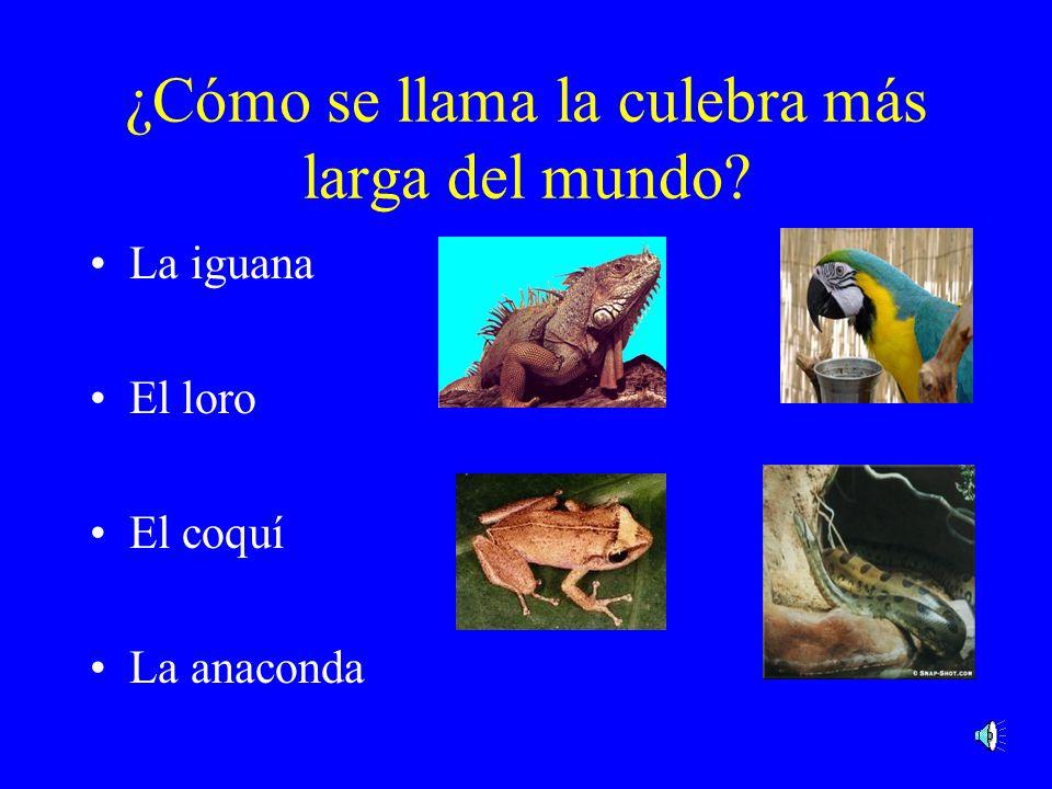 ¿Cuál es el animal más feroz? El cocodrilo La mariposa azul La iguana La ananconda