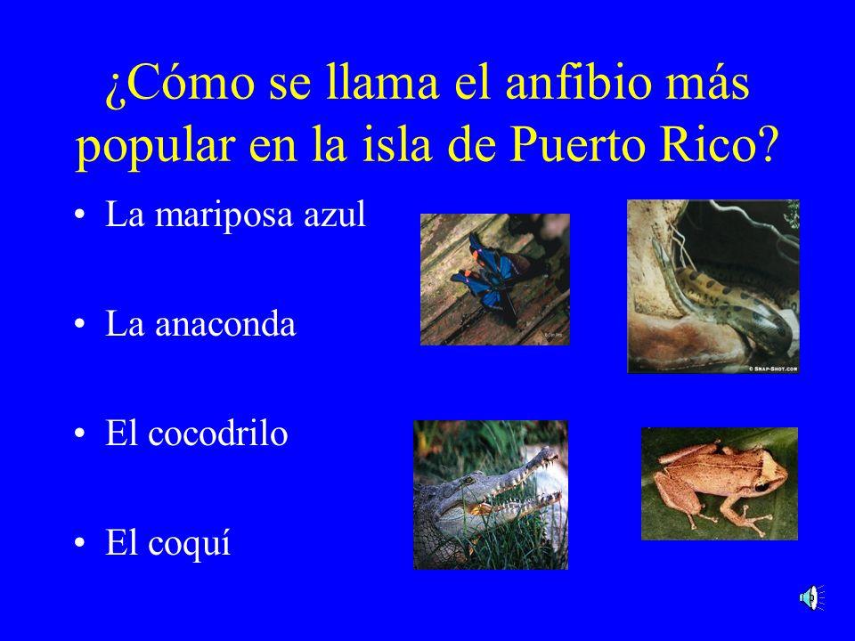 ¿Cómo se llama el reptil que tiene el aspecto más curioso? La iguana verde El loro La mariposa azul El coquí