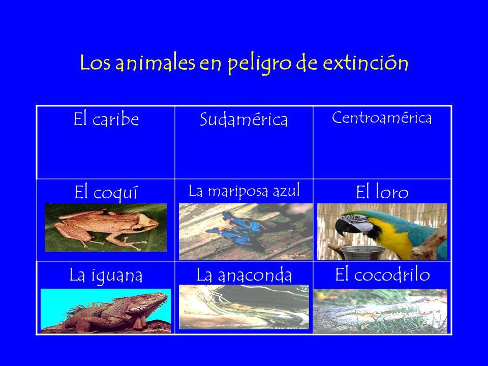 Los animales en peligro de extinción El caribeSudamérica Centroamérica El coquí La mariposa azul El loro La iguanaLa anacondaEl cocodrilo