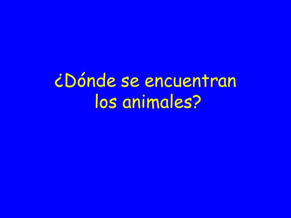 ¿Dónde se encuentran los animales?