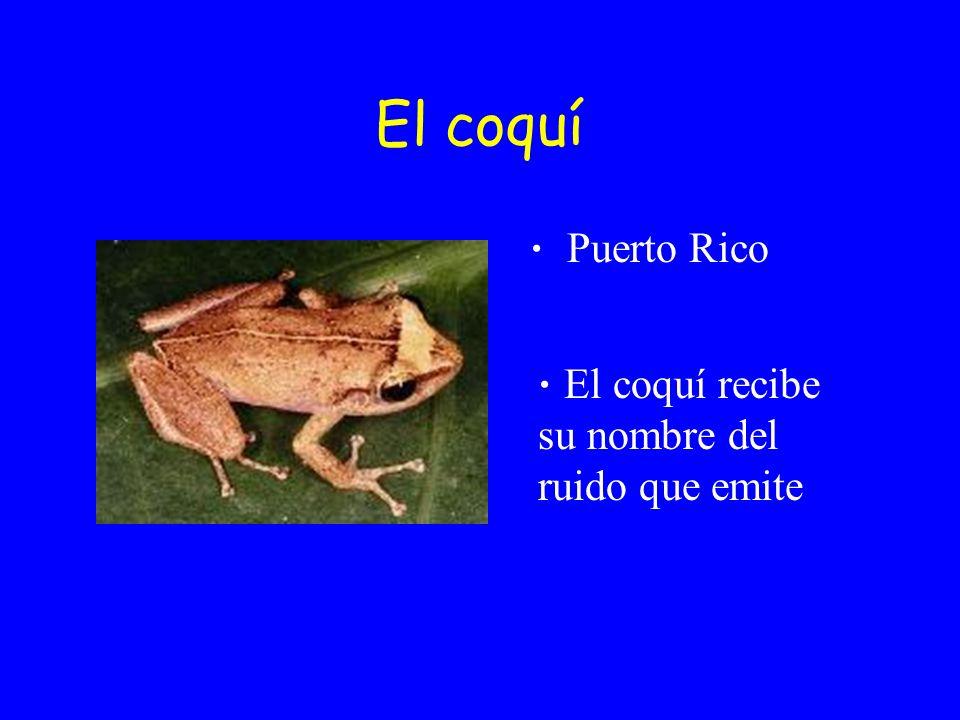 El coquí Puerto Rico El coquí recibe su nombre del ruido que emite