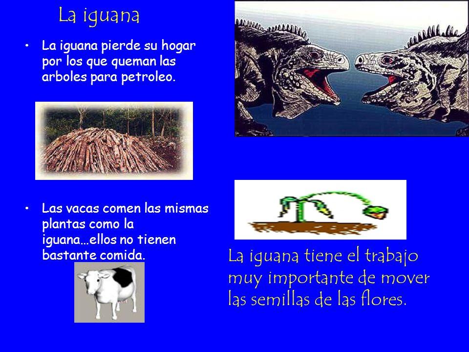 La iguana La iguana pierde su hogar por los que queman las arboles para petroleo.
