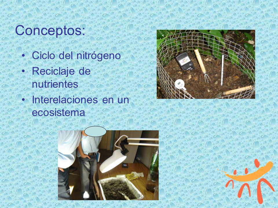 Conceptos: Ciclo del nitrógeno Reciclaje de nutrientes Interelaciones en un ecosistema