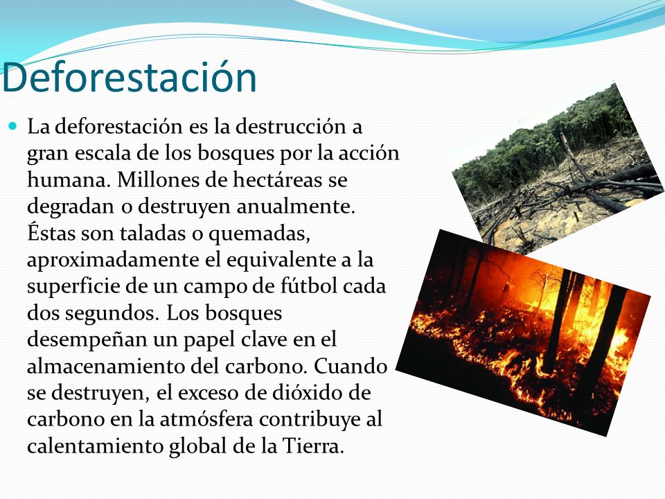 Deforestación La deforestación es la destrucción a gran escala de los bosques por la acción humana. Millones de hectáreas se degradan o destruyen anua