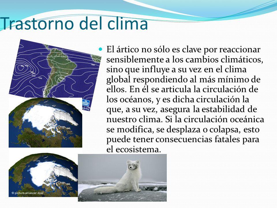Trastorno del clima El ártico no sólo es clave por reaccionar sensiblemente a los cambios climáticos, sino que influye a su vez en el clima global respondiendo al más mínimo de ellos.