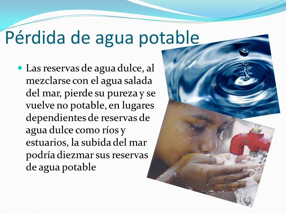 Pérdida de agua potable Las reservas de agua dulce, al mezclarse con el agua salada del mar, pierde su pureza y se vuelve no potable, en lugares depen