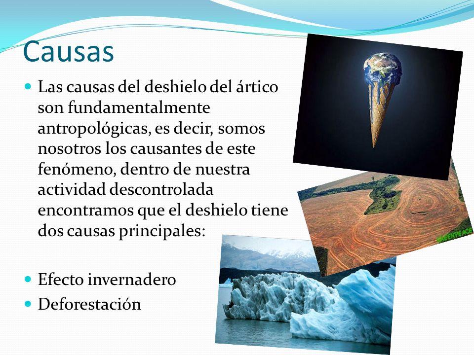Causas Las causas del deshielo del ártico son fundamentalmente antropológicas, es decir, somos nosotros los causantes de este fenómeno, dentro de nues