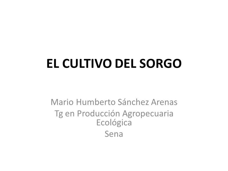 EL CULTIVO DEL SORGO Mario Humberto Sánchez Arenas Tg en Producción Agropecuaria Ecológica Sena