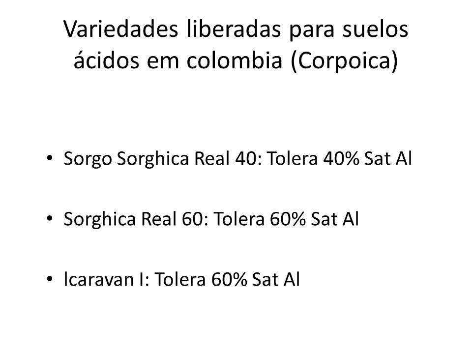 Variedades liberadas para suelos ácidos em colombia (Corpoica) Sorgo Sorghica Real 40: Tolera 40% Sat Al Sorghica Real 60: Tolera 60% Sat Al lcaravan I: Tolera 60% Sat Al