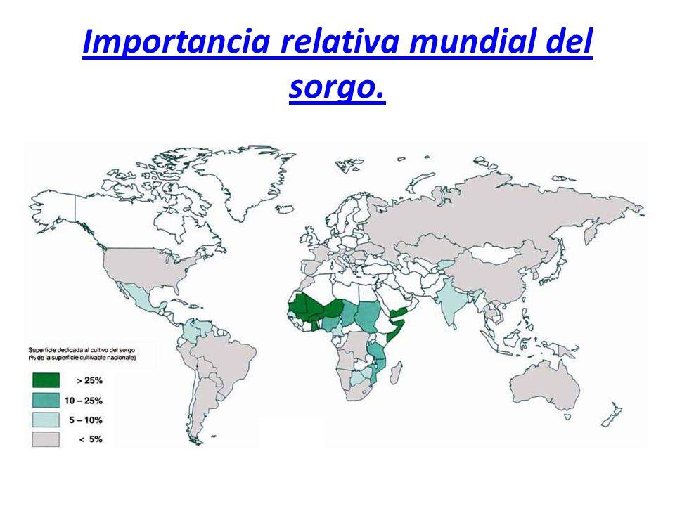 Importancia relativa mundial del sorgo.