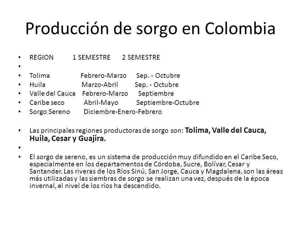Producción de sorgo en Colombia REGION 1 SEMESTRE 2 SEMESTRE Tolima Febrero-Marzo Sep.