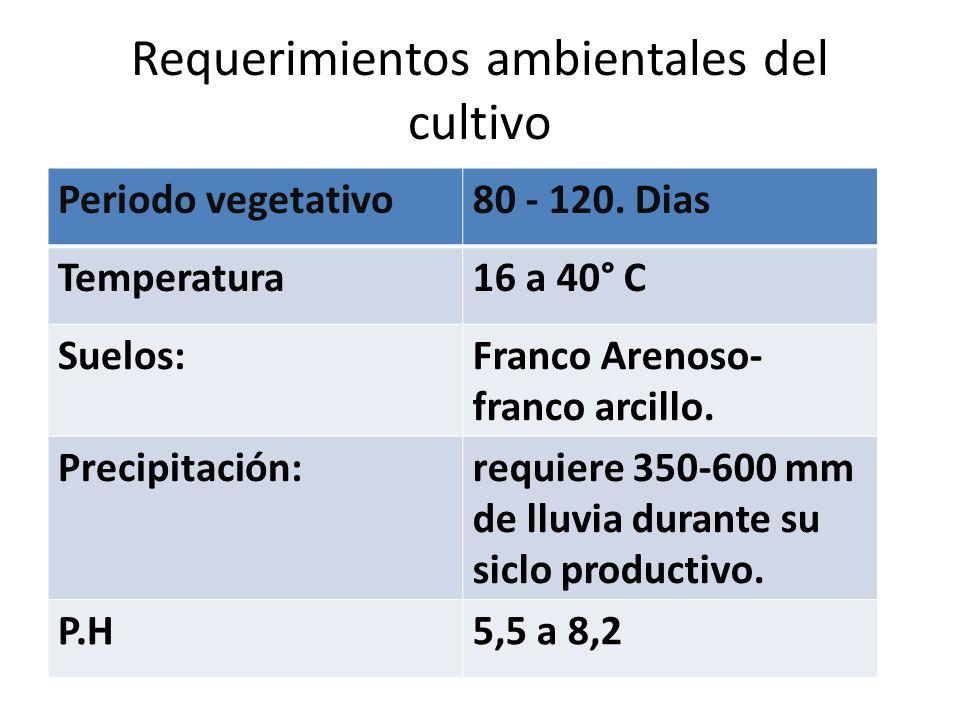 Requerimientos ambientales del cultivo Periodo vegetativo80 - 120.