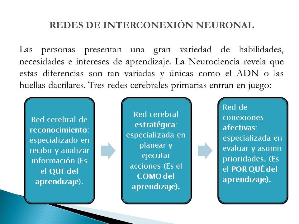 Red cerebral de reconocimiento: especializado en recibir y analizar información (Es el QUE del aprendizaje).
