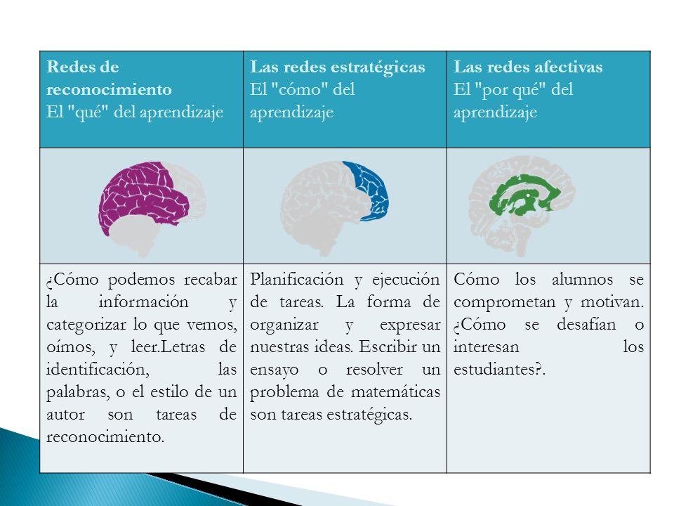 Redes de reconocimiento El qué del aprendizaje Las redes estratégicas El cómo del aprendizaje Las redes afectivas El por qué del aprendizaje ¿Cómo podemos recabar la información y categorizar lo que vemos, oímos, y leer.Letras de identificación, las palabras, o el estilo de un autor son tareas de reconocimiento.