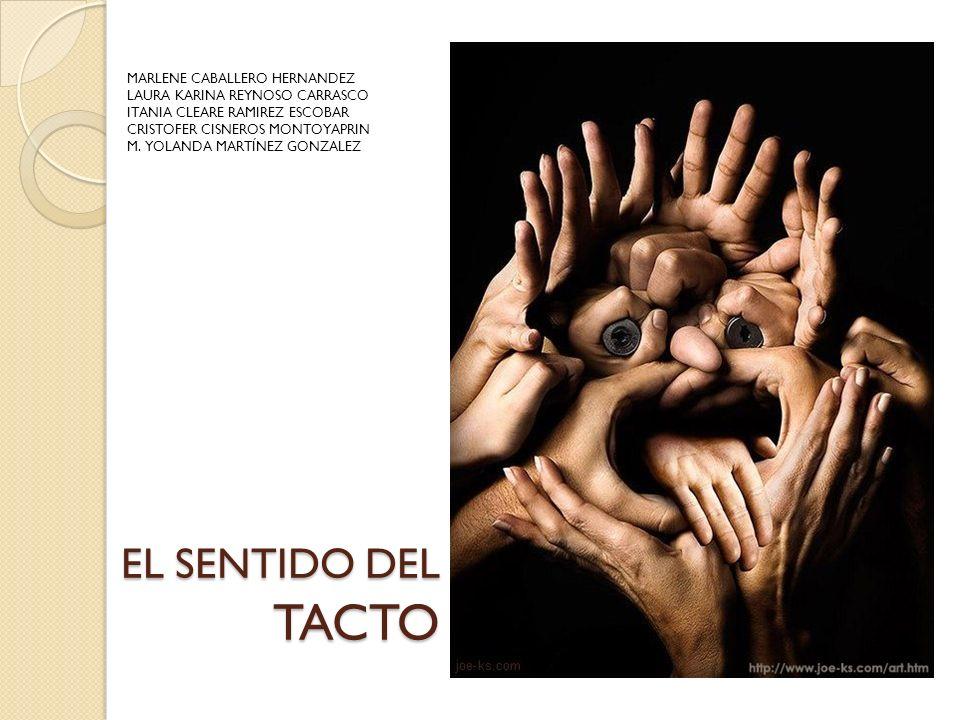 Tacto: La piel es el órgano más grande de nuestro organismo y el órgano de mayor sensibilidad táctil.