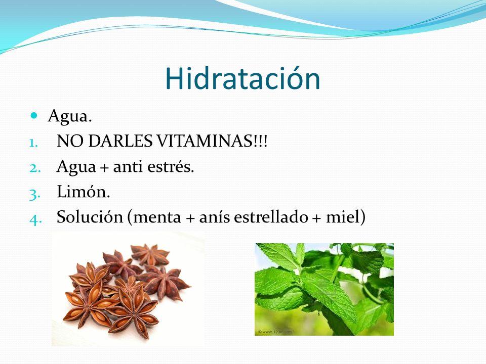 Hidratación Agua. 1. NO DARLES VITAMINAS!!! 2. Agua + anti estrés. 3. Limón. 4. Solución (menta + anís estrellado + miel)
