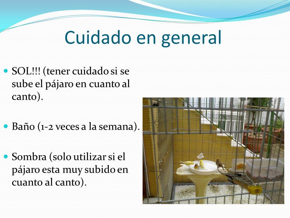 Cuidado en general SOL!!! (tener cuidado si se sube el pájaro en cuanto al canto). Baño (1-2 veces a la semana). Sombra (solo utilizar si el pájaro es
