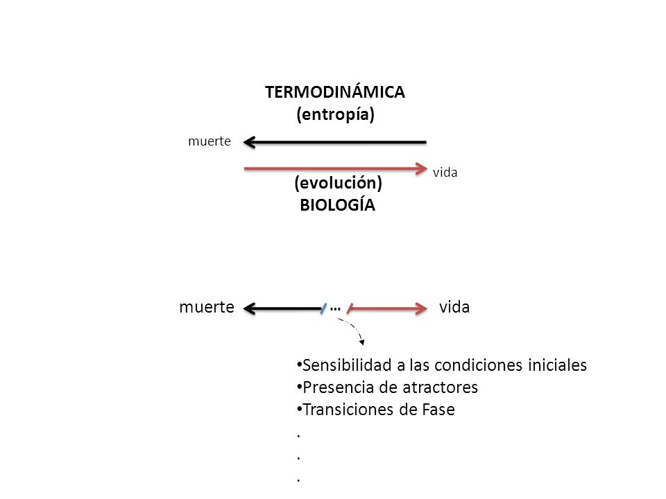 … TERMODINÁMICA (entropía) (evolución) BIOLOGÍA Sensibilidad a las condiciones iniciales Presencia de atractores Transiciones de Fase. vida muerte