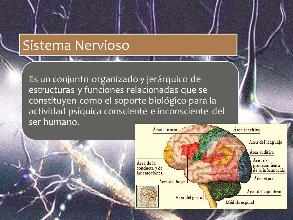 Sistema Nervioso Es un conjunto organizado y jerárquico de estructuras y funciones relacionadas que se constituyen como el soporte biológico para la a