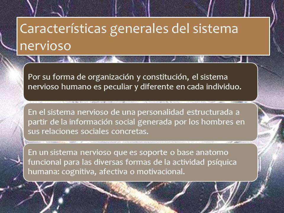 Características generales del sistema nervioso Por su forma de organización y constitución, el sistema nervioso humano es peculiar y diferente en cada