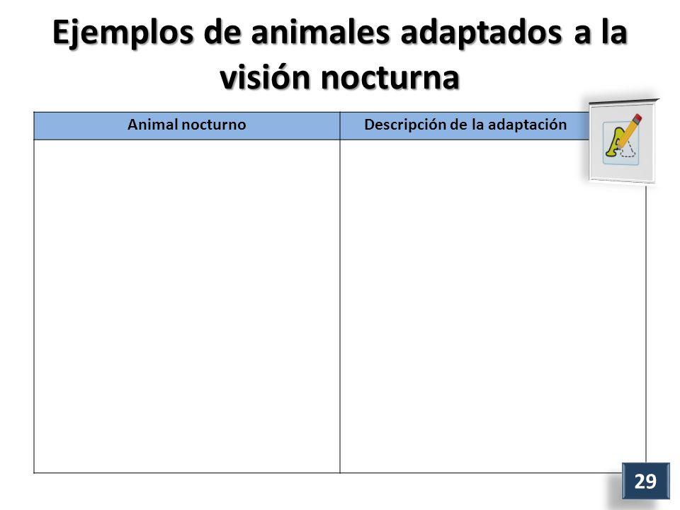 Ejemplos de animales adaptados a la visión nocturna Animal nocturno Descripción de la adaptación 29