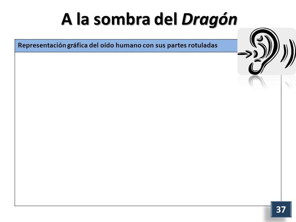 A la sombra del Dragón Representación gráfica del oído humano con sus partes rotuladas 37
