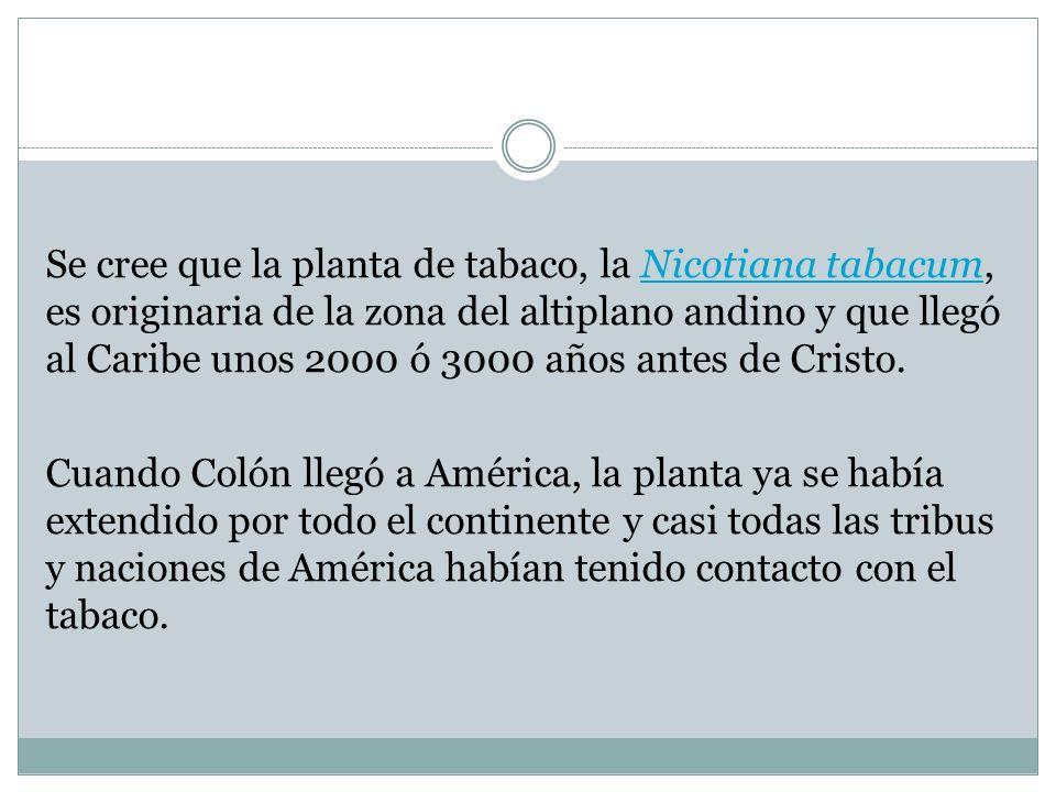 Se cree que la planta de tabaco, la Nicotiana tabacum, es originaria de la zona del altiplano andino y que llegó al Caribe unos 2000 ó 3000 años antes