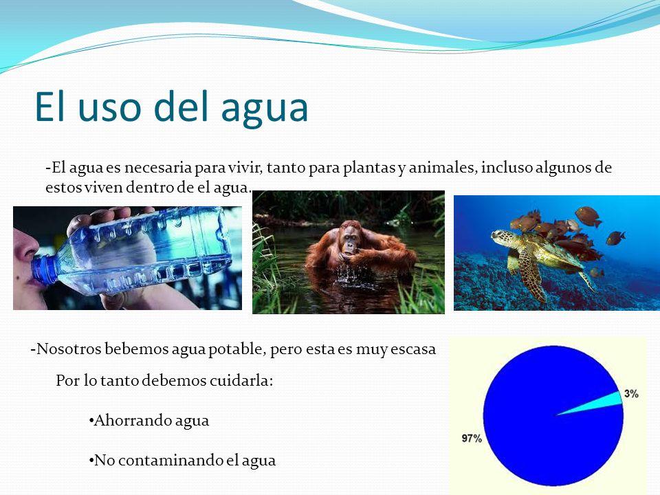 El uso del agua -El agua es necesaria para vivir, tanto para plantas y animales, incluso algunos de estos viven dentro de el agua. -Nosotros bebemos a