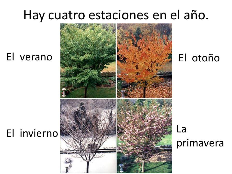 Hay cuatro estaciones en el año. El verano El invierno La primavera El otoño