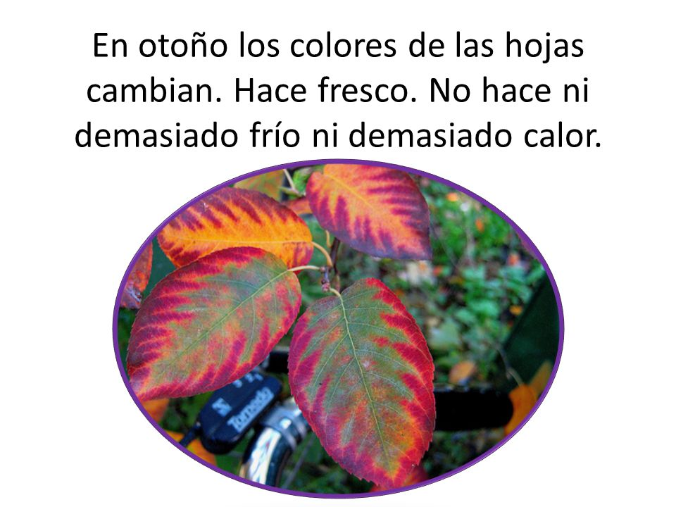En otoño los colores de las hojas cambian.Hace fresco.