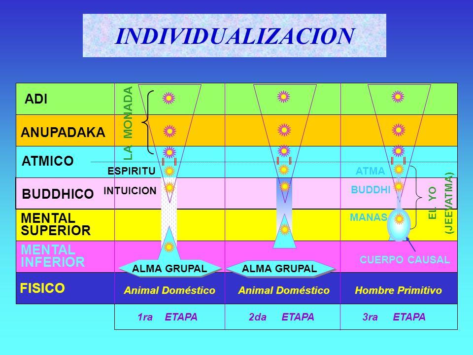 FISICO DENSO (STHÛLA) DOBLE ETERICO (PRÂNAMAYA) ASTRAL-MENTAL (KÂMA) CAUSAL (KÂRANA) YO (ÂTMA -- BUDDHI -- MANAS) LA PERSONALIDAD La Constitución del